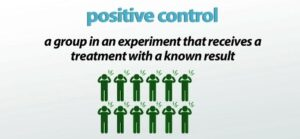 Positive Control: Importance of Testing During a Diagnostic Assay