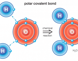 Polar Covalent Bond: Definitions, Types and Examples